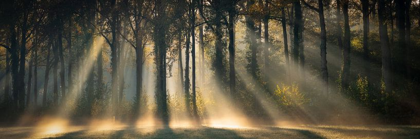 In the Spotlights van Edwin Mooijaart