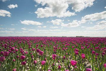 Tulpen van Marco Bakker