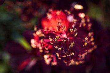 Pruikenboom van Rob Boon