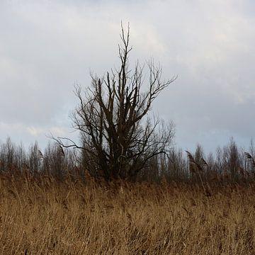 Een boom in de polder op een vierkante foto van Gerard de Zwaan