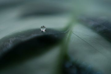 Wassertropfen auf Pflanze von Linda Hanzen