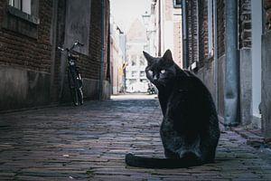 Poserende zwarte kat van