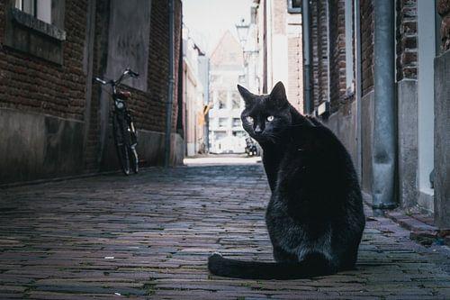 Poserende zwarte kat