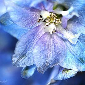 Close-up van een blauwe Ridderspoor (Delphinium 'Blue bird' ) van Flower and Art