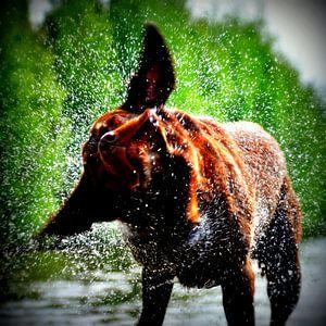 Labradors houden van water!