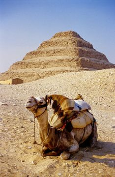 The Camel withe the Sakkara Pyramid - Analoge Fotografie! von Tom River Art
