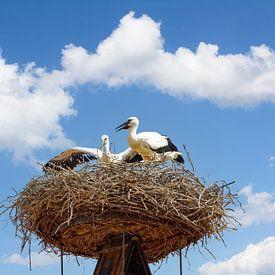 Störche auf ihrem Nest,Rust,Neusiedler See von Peter Eckert
