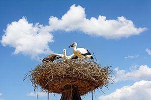 Ooievaars op hun nest,Rust,Neusiedlmeer van Peter Eckert