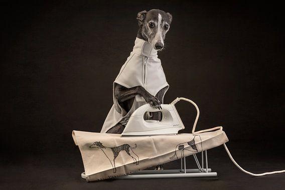 Strijkende hond! van Nuelle Flipse