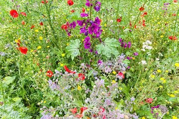 Bloeiende veldbloemen in Juli van