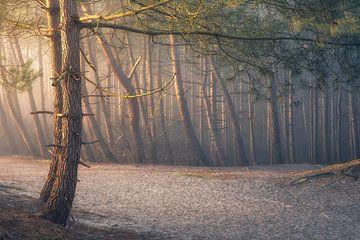 Side Light van Erik de Jong