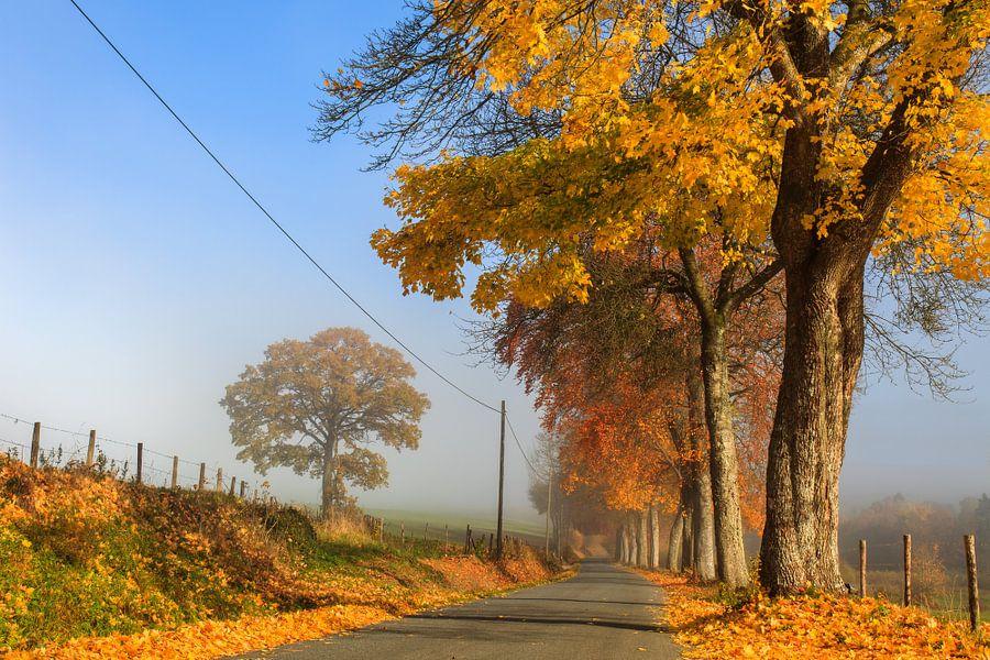 The Magic of Autumn van Marc Smits