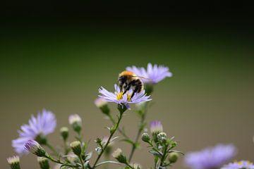 bij op bloem van Eveline De Brabandere