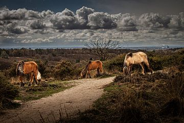 Chevaux sauvages sur Comitis Photography & Retouch