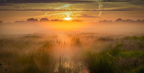 Zonsopkomst boven het Nationaal park De Weerribben-Wieden op een mooie mistige lente ochtend met war