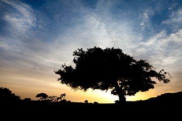 Boom bij zonsondergang van Dennis Claessens