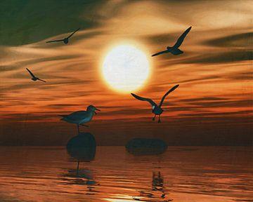 Meeuwen bij zonsondergang 3