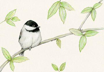 Eine Bleistiftzeichnung einer Carolina von Bianca Wisseloo