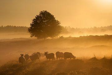 Gouden zonsopkomst. van