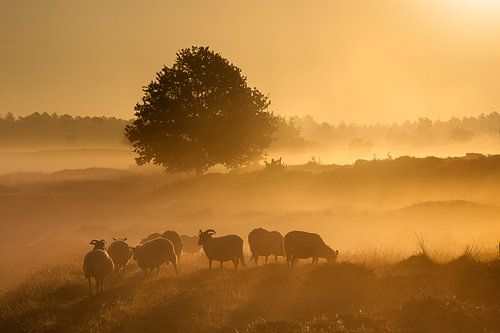 Gouden zonsopkomst.