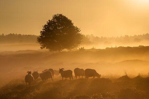 Gouden zonsopkomst. van Piet Haaksma