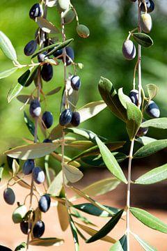 Schwarze Oliven in Apulien von Bianca ter Riet