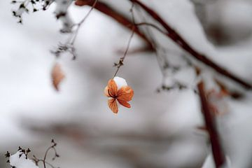 bloemen part 44 van Tania Perneel