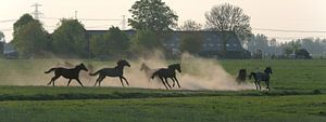 Groningen / Dorkwerd / Galloperende paarden / 2011