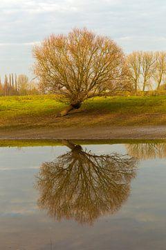 boom gespiegeld in het water van Bernadet Gribnau