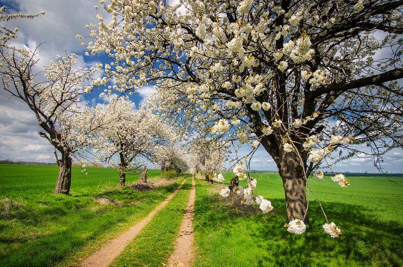 Cherrie Trees van Steffen Gierok