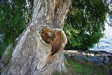 De liefde in de natuur van Naomi Elshoff