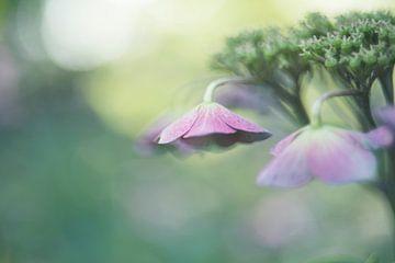 Dreamy Pink van Marianne Rouwendal