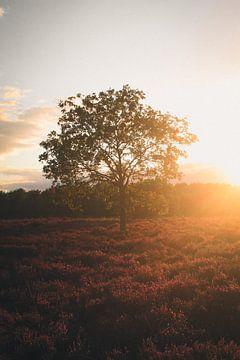 'Golden hour' @ Speulder heide van Sharissa Hop