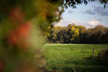 Deels struik, deels weiland met koeien van Tot Kijk Fotografie: natuur aan de muur