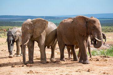 Olifanten op weg naar de waterplaats van Jack Koning