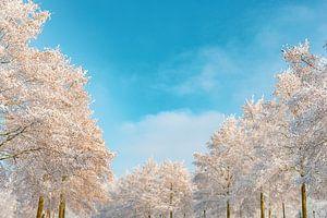 Besneeuwde winterbomen met een prachtige blauwe lucht