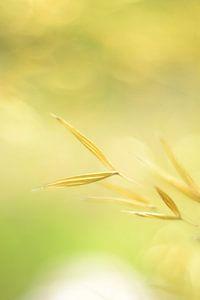 Siergras geel vintage