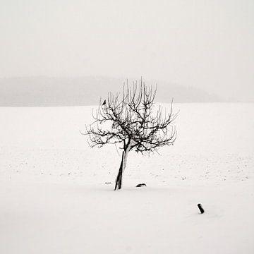 winterse stilte van Lena Weisbek