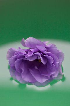 Design by nature (3087) van Tot Kijk fotografie: natuur aan de muur