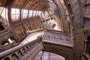 Natuurhistorisch museum Londen / Natural History museum London van Michael Echteld