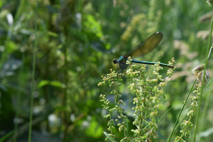 Libelle in natürlicher Landschaft von Breezy Photography and Design