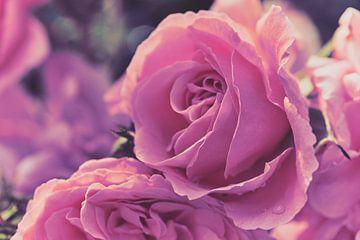 Rosen im matten Style von C. Nass