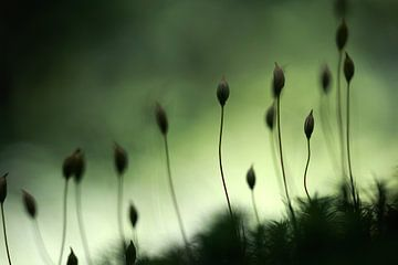 Close up of moss van Jana Behr