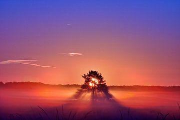 Zonsopgang op de hei in september van Pieter Beens