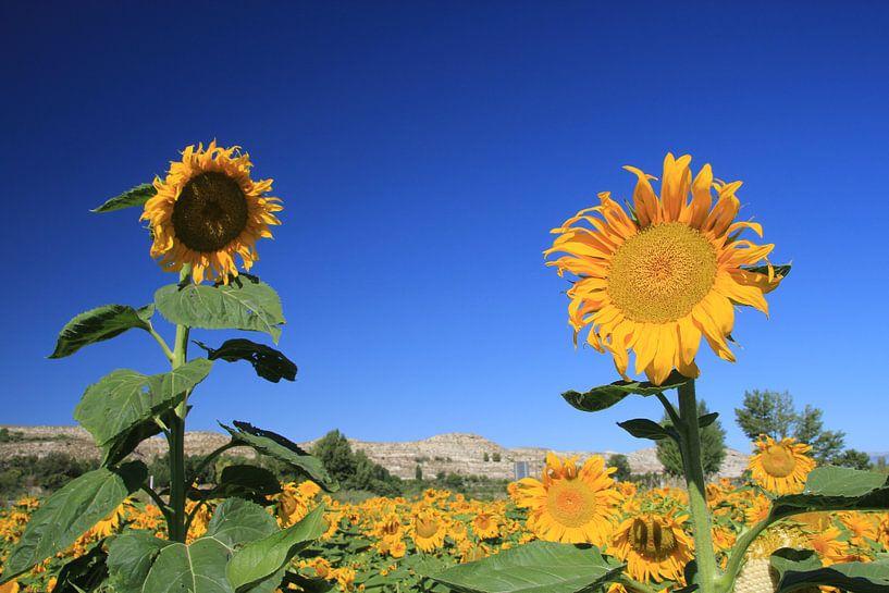 The Two Sunflowers van Cornelis (Cees) Cornelissen