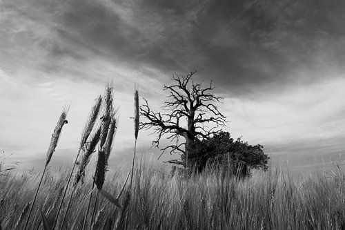 Contrastrijk landschap met een tegenstelling tussen drama en opklaring