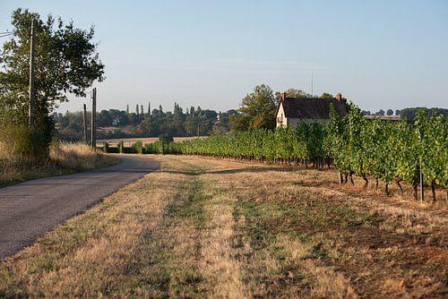Franse platteland met zicht op een wijngaard sur