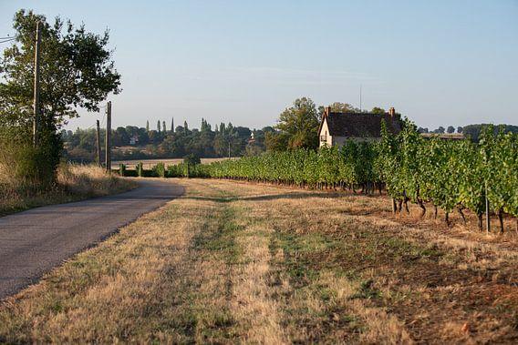 Franse platteland met zicht op een wijngaard van Marco Bakker