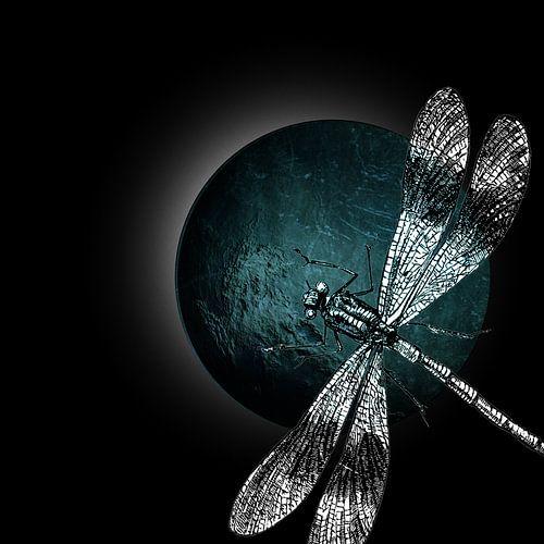 DRAGONFLY IV-B sur Pia Schneider