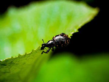 Käfer am Blattrand von Stijn Cleynhens